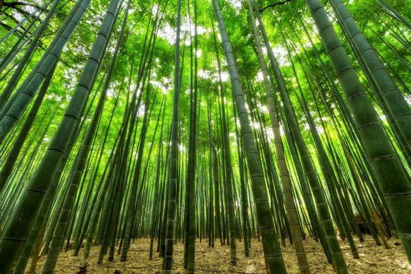 bambú sostenible